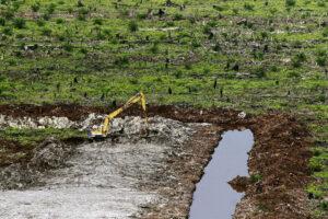 Kerumutan peat swamp forest, Sumatra, Indonesia(Image: Oka Budhi / Greenpeace)