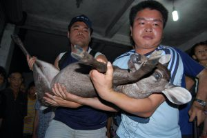 Members of animal conservationists group confiscate a Reindeer from Hainan Market (Image: Alamy)