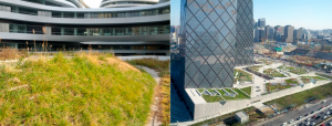 Green roofs in Beijing could reduce air particle pollution equivalent to taking 730,000 cars off the road (Image by Gavin Lohry).