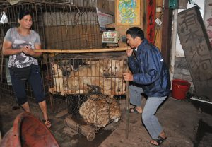 As many as 10,000 dogs were reportedly killed in Yulin's festival, many of them still alive while they were electrocuted, boiled or skinned (Image:Alamy)