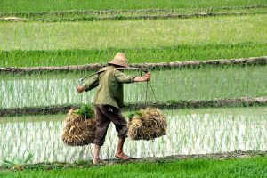 It's hard to overstate the importance of food security in China, which has one-fifth of the world's population and only 8% of its arable land (Image: Alamy)