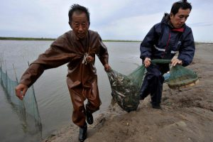 Fishermen bring their daily catch ashore near the Chinese city of Tianjin.