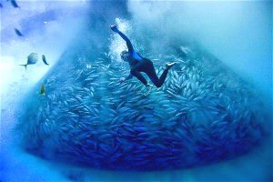 diver in the ocean surrounded by fish. The world's oceans require much better governance, says the Global Ocean Commission (Image by Alex Hofford / Greenpeace)