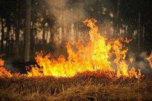 crop burning in Beijing