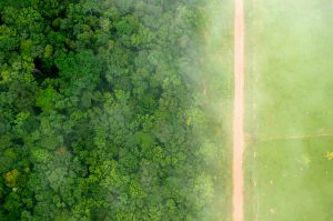 A soya plantations now stand on what was once Brazilian rainforest