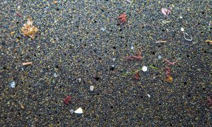 Microplastics in the Azores. Campaigners say microbeads are the easiest type of this pollution to tackle. Photograph: Peter Charaf/RaceforWater