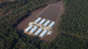 """十年来最强的大西洋飓风""""马修""""侵袭美国东南部,导致当地工厂化养殖场中的大批动物丧命、化粪池漫溢。图片来源:周晚晴、Caroline Wimberly/Brighter Green"""