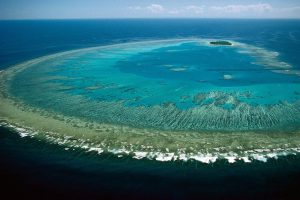 The Great Barrier Reef's major threat is climate change. (Image by Lock the Gate Alliance)