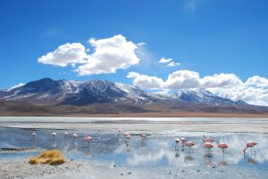 Laguna Hedionda, a saline lake in Bolivia famous for migratory species of pink and white flamingos (Image byBorja García de Sola Fernández)