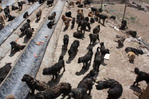 Dog shelter in Maozhuang in Yushu