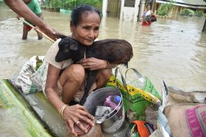 A flood affected resident of Jakhalabandha, Assam on the south bank of the Brahmaputra being evacuated on a raft on August 13, along with the family's livestock (Image: Biju Boro)