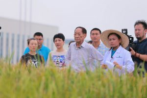 Yuan and his team in rice fields at the Qingdao Seawater Rice Research Centre (Image: 海水稻研发中心/weibo)