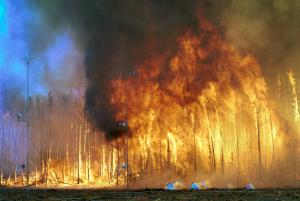 (Image:USDA Forest Service)
