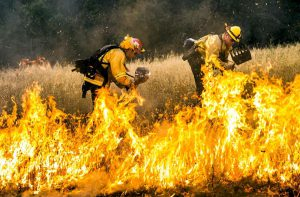 Fifteen of California's 20 largest wildfires on record have burned since 2000(Image:Jeff Head)