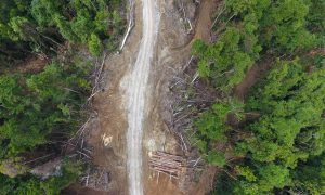 A logging road in East New Britain province, Papua New Guinea. (Image: Global Witness)