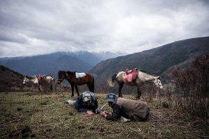 Harvesting of caterpillar fungus in Askot, Uttarakhand state, Western Himalayas(Image: Alamy)