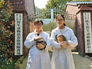 Xiao Chen (left) and her colleague at Jinhua Wildlife Rescue Centre, along with two rescued Chinese pangolins, Rou Rou and Tuan Tuan (Image: Meng Haifeng /Jinhua Wildlife Rescue Centre)