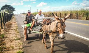 A donkey working in the centre of Bahía. Although donkeys are still often used, motorcycles have been increasingly popular in recent years.