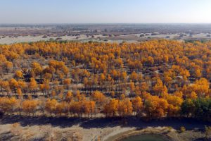 "afforestation of Planted ""shelterbelt"" forest in Gansu province, northwest China (Image: Alamy)"