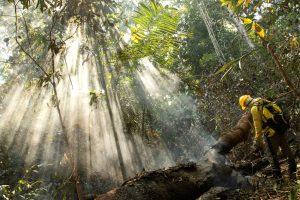 在亚马逊上河流域参与灭火的巴西消防员。图片来源:Alamy