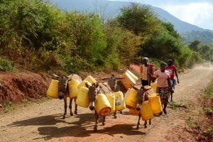 肯尼亚的妇女用驴子来进行长距离的运水。图片来源:Alamy