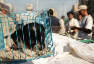 Unofficial pet market, downtown Beijing (Image: Alamy)
