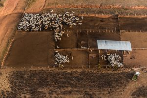 Beef production is linked with the deforestation of the Amazon but traceability in supply chains is poor (Image: Fábio Nascimento)