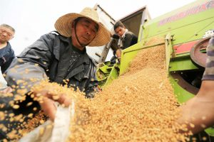 Harvesting wheat in Anhui province (Image: Alamy)