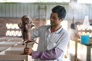 A farmer checks a bamboo rat bred in Qinzhou, south China (Image: Alamy)