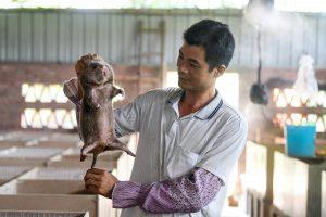 A farmerchecks a bamboo rat bred in Qinzhou, south China(Image: Alamy)