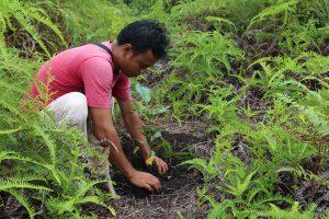Reforestation in Borneo (Image:James Anderson / WRI)