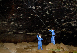 Scientists collect bats in a cave, surveilling for emerging zoonotic diseases