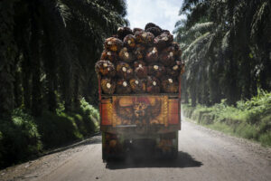 Transporting oil palm fruit bunches in Riau, Indonesia