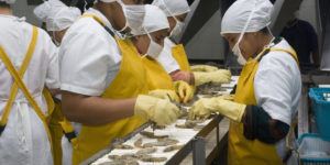 Workers at a shrimp factory in Ecuador