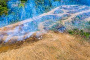 从高处放眼望去,为了给种植油棕腾出土地,大片大片的热带雨林被砍伐。图片来源: RDW Aerial Imaging /Alamy