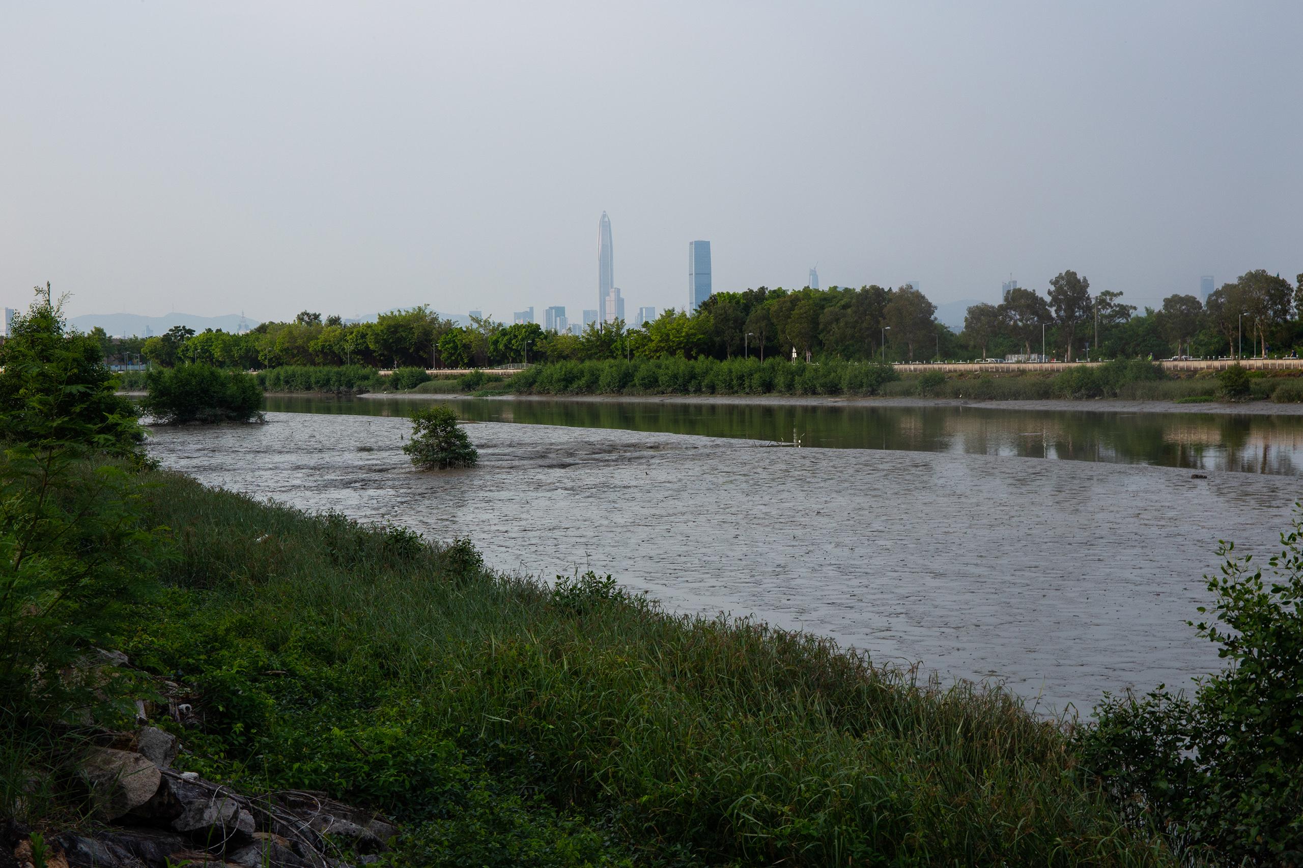 HK_mangroves