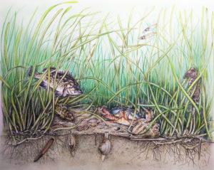 Biodiverse habitat
