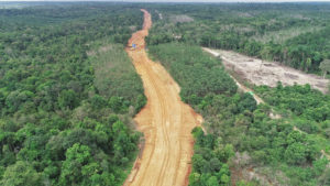 Coal highway through Sumatran forest threatens wildlife and people