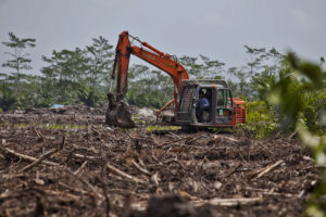 Clearing land for oil palm in Kalimantan, Indonesia. Scientists warn that hotspots for pandemic emergence tend to coincide with areas of high biodiversity (Image © Ulet Ifansasti / Greenpeace)