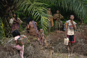Southeast Asia's hunter-gatherers and palm oil