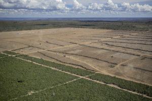 Deforestation for the production of soy in the Cerrado region of Brazil