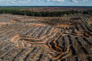 An oil palm concession in New Guinea (Image © Ulet Ifansasti / Greenpeace)