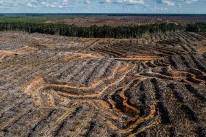 新几内亚的一个特许油棕种植园。图片来源:© Ulet Ifansasti / Greenpeace
