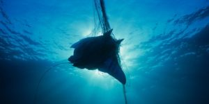giant manta ray being caught