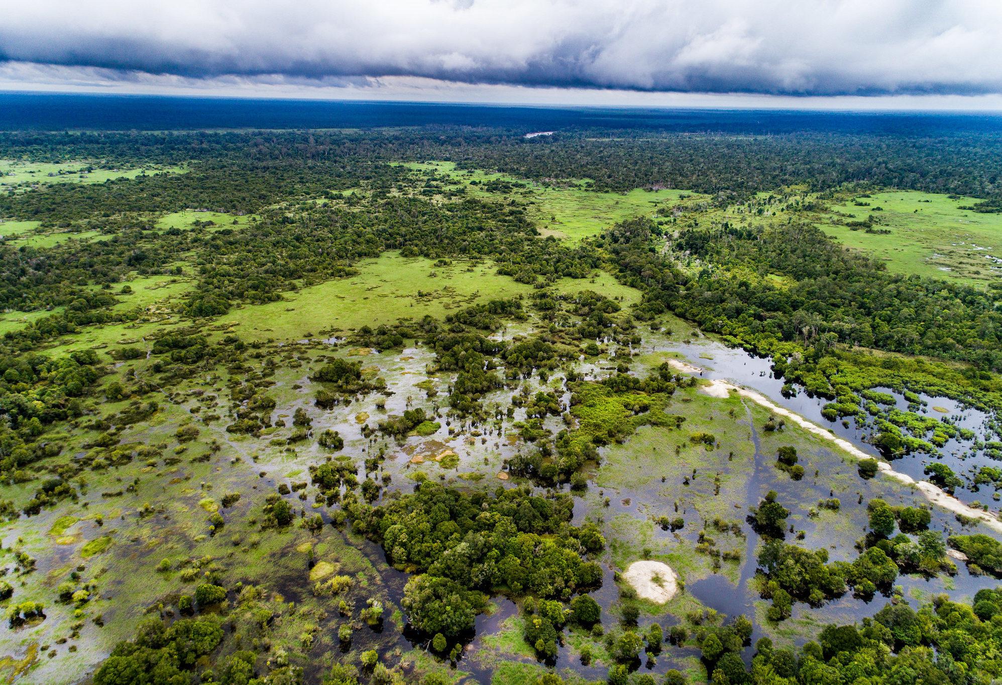 indonesia peatland soil carbon sequestration