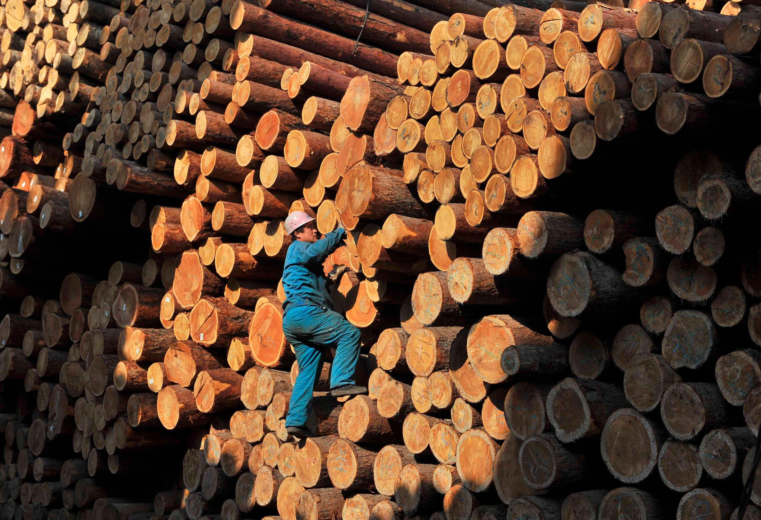 A worker climbs on piles of logs at a timber storage in Shenyang, Liaoning provinc