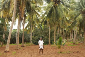 palm oil farmer south india china dialogue