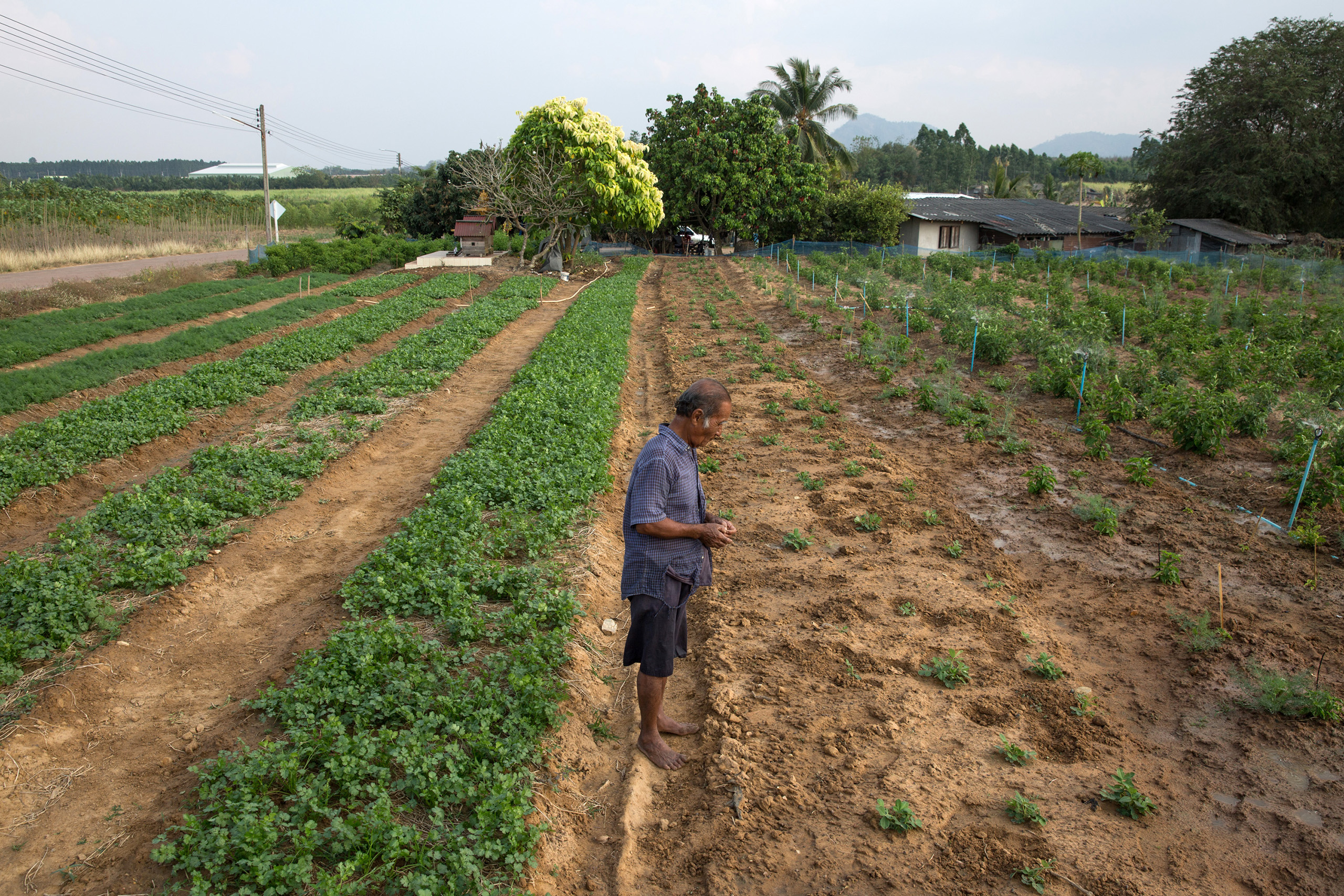 A farmer who was born here surveys his land which is located roughly one kilometre from the factory. The factory can be seen in the distance.