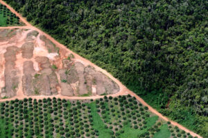 deforestation in indonesia