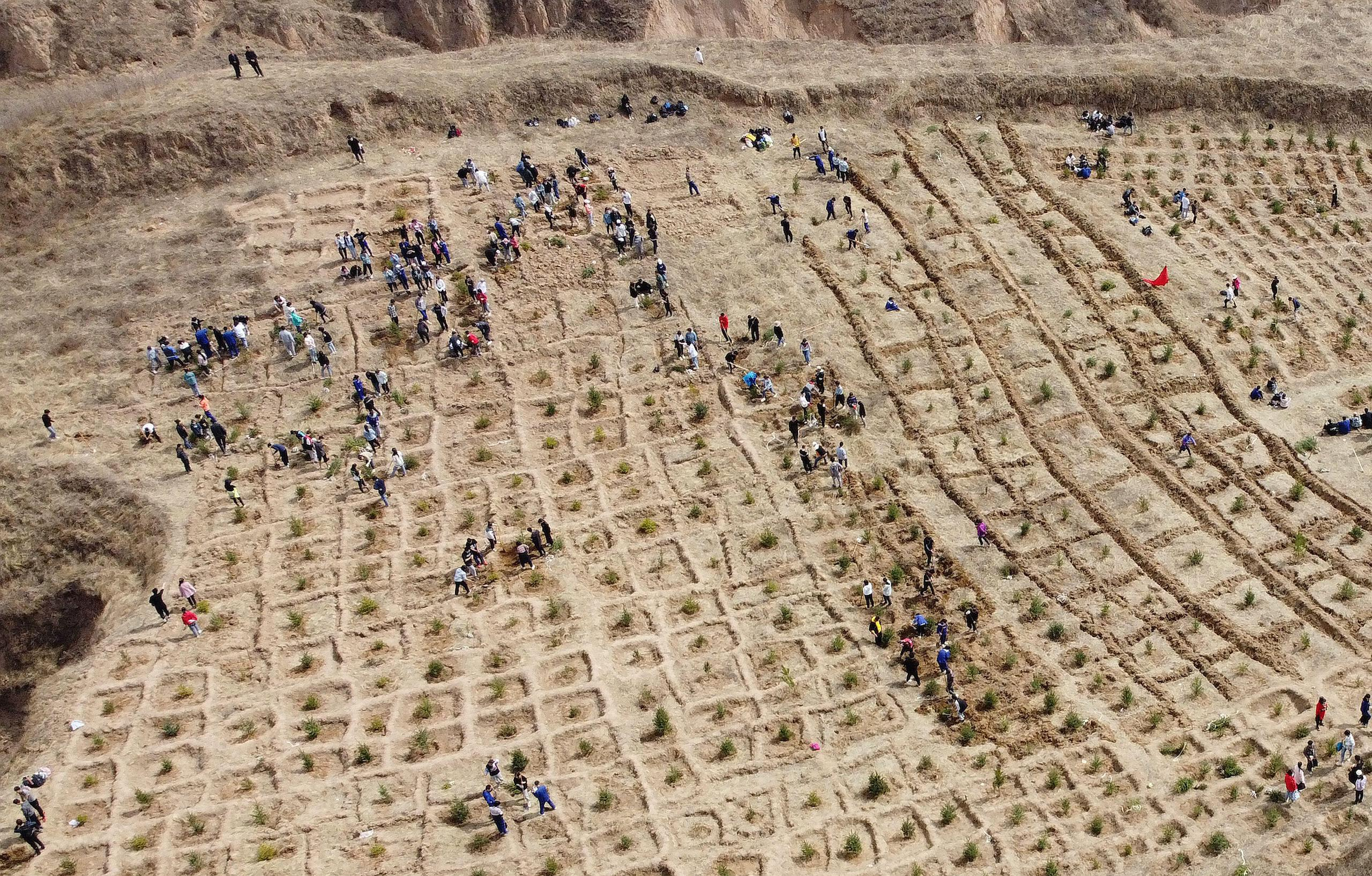 aerial photo reforestation inner mongolia China